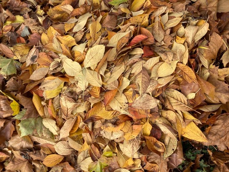 Blätterhaufen aus bunten Blättern