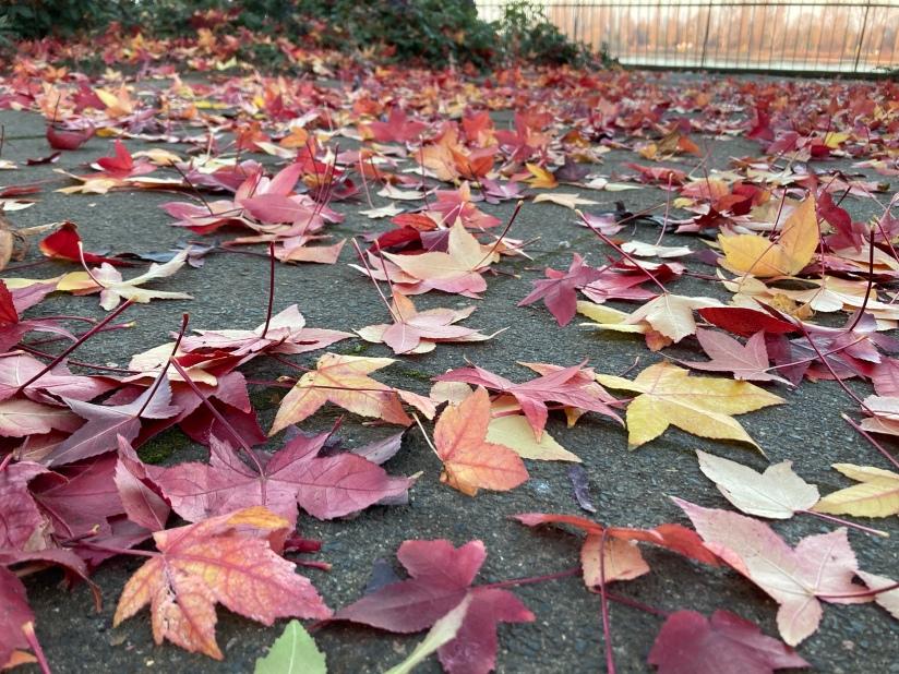 Bunte Blätter draußen auf einem Steinboden