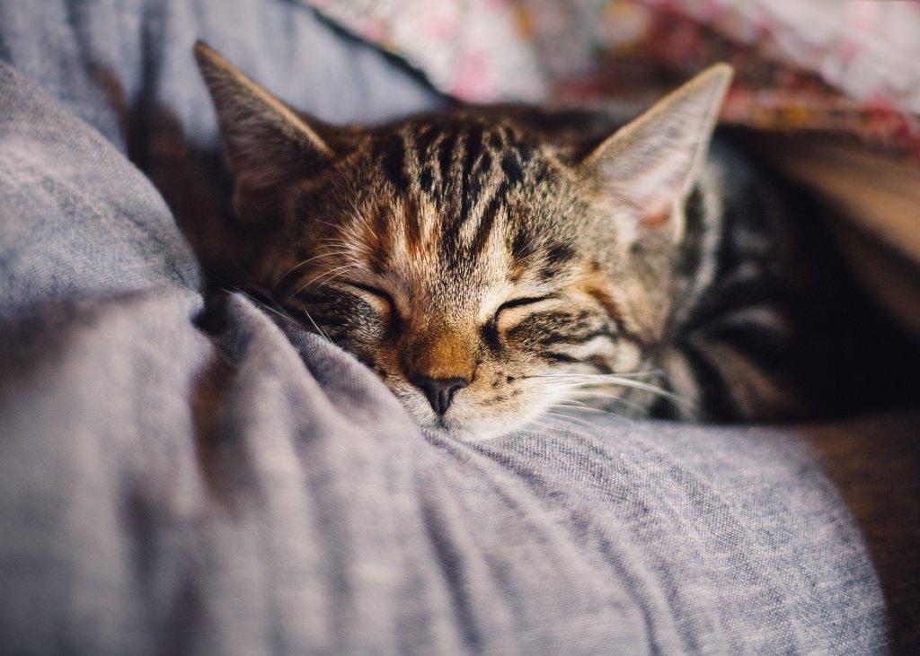 sleeping cat on a pillow