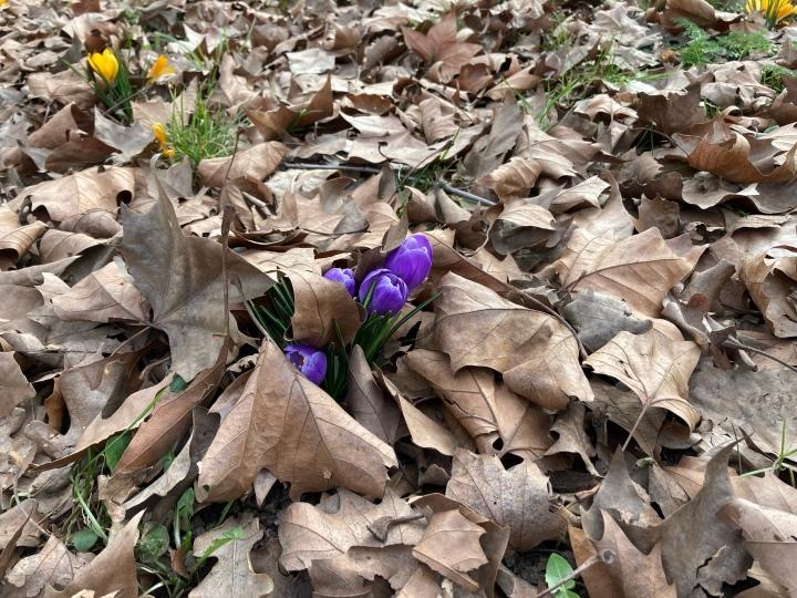 Der Frühling kommt…